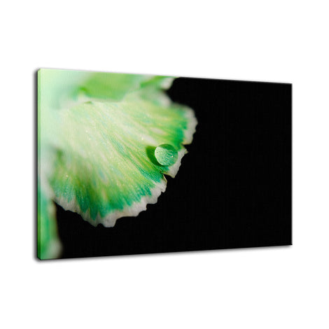 Water Droplet on Carnation Petal Nature / Floral Photo Fine Art Canvas Wall Art Prints