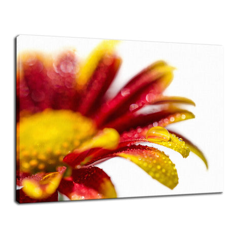 Water Droplets On Mum Petals Nature / Floral Photo Fine Art Canvas Wall Art Prints