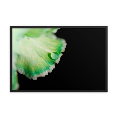 Water Droplet on Carnation Petal Floral Nature Photo Framed Wall Art Print