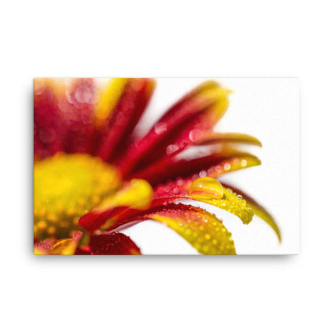 Water Droplets On Mum Petals Floral Nature Canvas Wall Art Prints