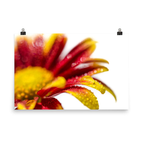 Water Droplets On Mum Petals Floral Nature Photo Loose Unframed Wall Art Prints