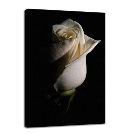 White Rose Low Key Nature / Floral Photo Fine Art Canvas Wall Art Prints