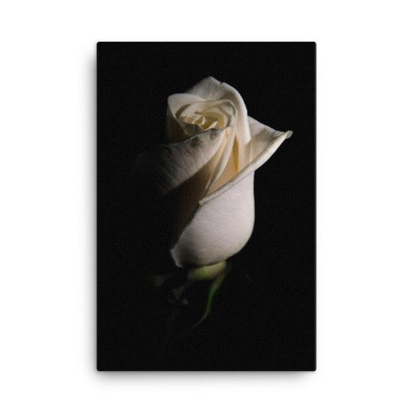 White Rose Low Key Floral Nature Canvas Wall Art Prints  - PIPAFINEART