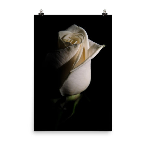 White Rose Low Key Floral Nature Photo Loose Unframed Wall Art Prints
