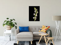 "White Snapdragons Against Black Nature / Floral Photo Fine Art Canvas Wall Art Prints 24"" x 36"" / Fine Art Canvas - PIPAFINEART"