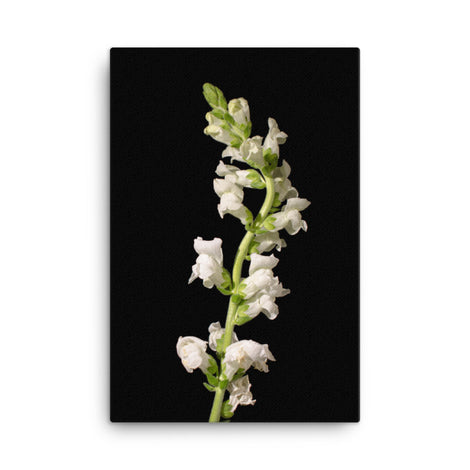 White Snapdragons Floral Nature Canvas Wall Art Prints