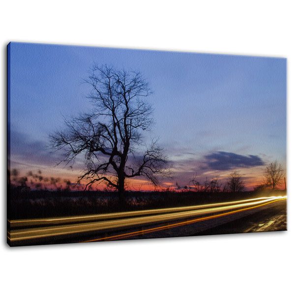 Wicked Tree Rural Landscape Photo Fine Art Canvas & Unframed Wall Art Prints - PIPAFINEART