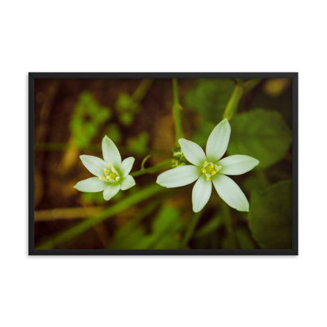 Wild Beauty Floral Nature Photo Framed Wall Art Print