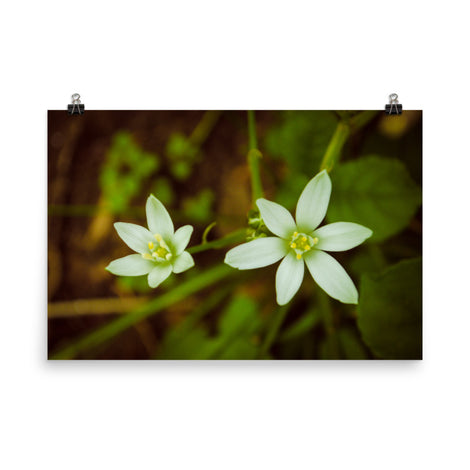 Wild Beauty Floral Nature Photo Loose Unframed Wall Art Prints