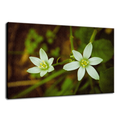 Wild Beauty Nature / Floral Photo Fine Art Canvas Wall Art Prints