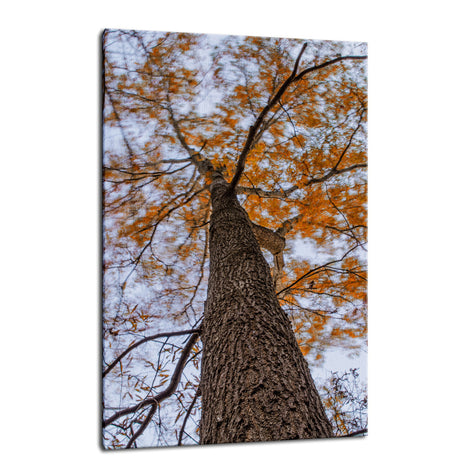 Wind in the Trees Botanical / Nature Photo Fine Art Canvas Wall Art Prints