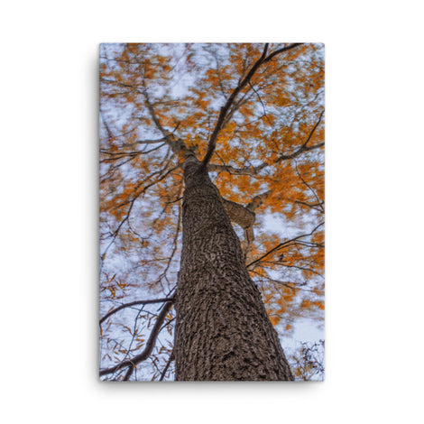 Wind in the Trees Botanical Nature Canvas Wall Art Prints