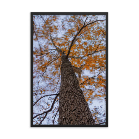 Wind in the Trees Botanical Nature Photo Framed Wall Art Print