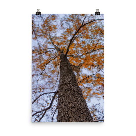Wind in the Trees Botanical Nature Photo Loose Unframed Wall Art Prints