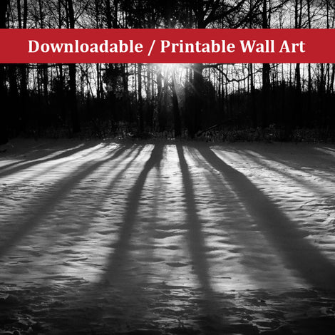Winter Shadows from the Trees Landscape Photo DIY Wall Decor Instant Download Print - Printable