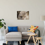 "Wolf Eyes Animal / Wildlife Photograph Fine Art Canvas & Unframed Wall Art Prints 20"" x 30"" / Canvas Fine Art - PIPAFINEART"