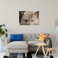 "Wolf Eyes Animal / Wildlife Photograph Fine Art Canvas & Unframed Wall Art Prints 24"" x 36"" / Canvas Fine Art - PIPAFINEART"
