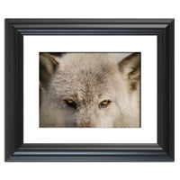 Wolf Eyes Animal / Wildlife Photograph Fine Art Canvas & Unframed Wall Art Prints  - PIPAFINEART
