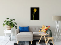 "Yellow Tulip on Black Background 5 Nature / Floral Photo Fine Art Canvas Wall Art Prints 20"" x 30"" / Fine Art Canvas - PIPAFINEART"