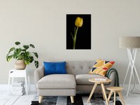 "Yellow Tulip on Black Background 5 Nature / Floral Photo Fine Art Canvas Wall Art Prints 24"" x 36"" / Fine Art Canvas - PIPAFINEART"
