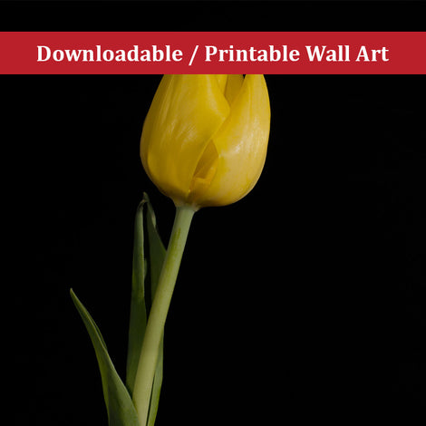 Yellow Tulip on Black Floral Nature Photo DIY Wall Decor Instant Download Print - Printable