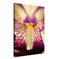 Antiqued Purple Iris Flower Nature / Floral Photo Fine Art Canvas Wall Art Prints  - PIPAFINEART
