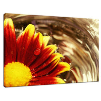 Floating Mum Nature / Floral Photo Fine Art Canvas Wall Art Prints  - PIPAFINEART