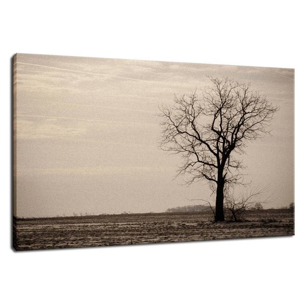 Lonely Tree in Black and White Rural Landscape Photo Fine Art Canvas Wall Art Prints  - PIPAFINEART