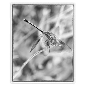 Animal / Wildlife Photograph Dragonfly in Black and White - Fine Art Canvas - Home Decor Wall Art Prints Unframed