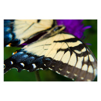 Butterfly Wings Animal / Wildlife Photograph Fine Art Canvas & Unframed Wall Art Prints  - PIPAFINEART
