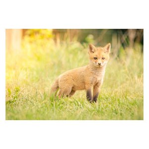 Animal / Wildlife Photograph Baby Red Fox in the Sun - Fine Art Canvas - Home Decor Wall Art Prints Unframed