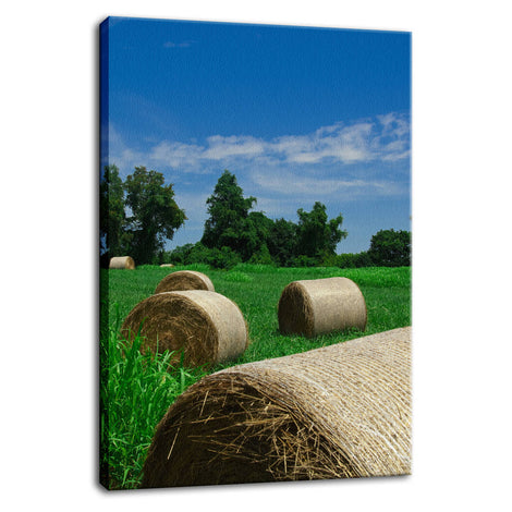 Hay Whatcha Doin in the Field Landscape Photo Fine Art Canvas Wall Art Prints