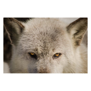 Animal / Wildlife Photograph Wolf Eyes - Fine Art Canvas - Home Decor Wall Art Prints Unframed