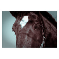 The Eye of Tonk Animal / Horse Photograph Fine Art Canvas & Unframed Wall Art Prints  - PIPAFINEART