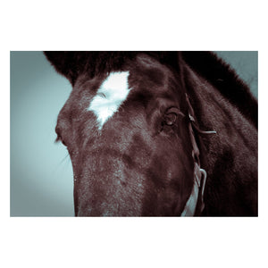 Animal / Horse Photograph The Eye of Tonk - Fine Art Canvas - Home Decor Wall Art Prints Unframed