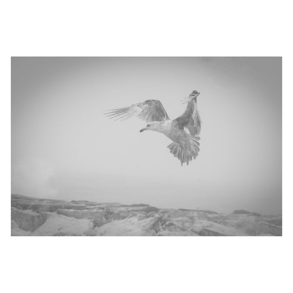 Animal / Wildlife Photograph Gull in the Mist - Black and White Coastal Fine Art Canvas - Home Decor Wall Art Prints Unframed