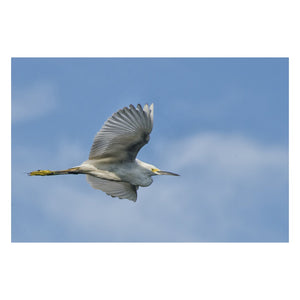 Animal / Wildlife Photograph Egret in Flight - Fine Art Canvas - Home Decor Wall Art Prints Unframed