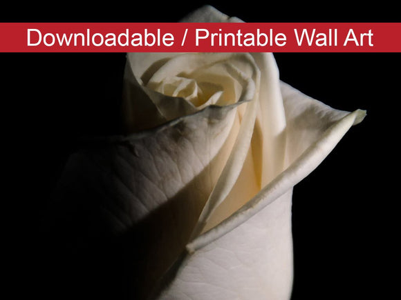Digital Wall Art, Downloadable Prints, Floral Nature Photograph White Rose Low Key - Wall Decor Instant Download Print - Printable