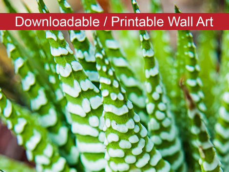 Succulent 2 Botanical Nature Photo DIY Wall Decor Instant Download Print - Printable