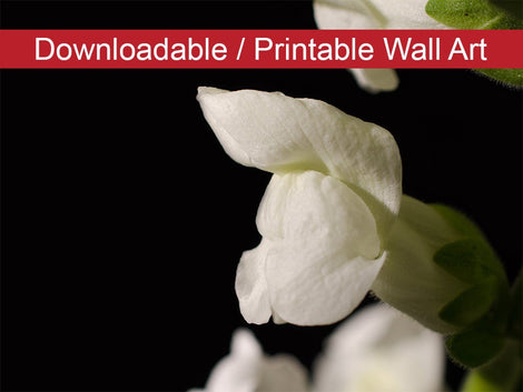 Single Snapdragon Bloom on Black Floral Nature Photo DIY Wall Decor Instant Download Print - Printable