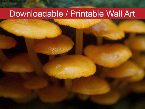 Digital Wall Art, Downloadable Prints, Botanical Nature Photograph Mushroom Family - Wall Decor Instant Download Print - Printable - PIPAFINEART