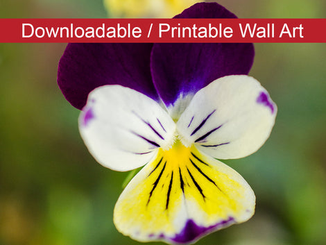 Pretty Little Violets Floral Nature Photo DIY Wall Decor Instant Download Print - Printable
