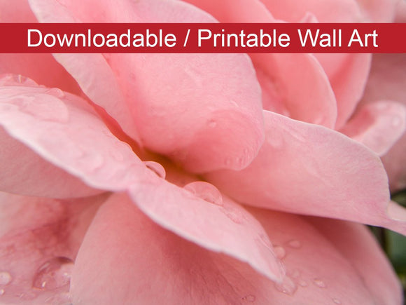 Digital Wall Art, Downloadable Prints, Floral Nature Photograph Pink Passion - Wall Decor Instant Download Print - Printable