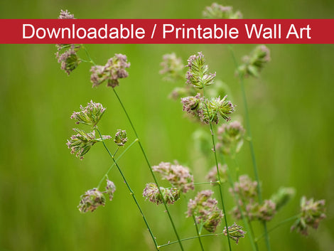 Softened Fields Botanical Nature Photo DIY Wall Decor Instant Download Print - Printable