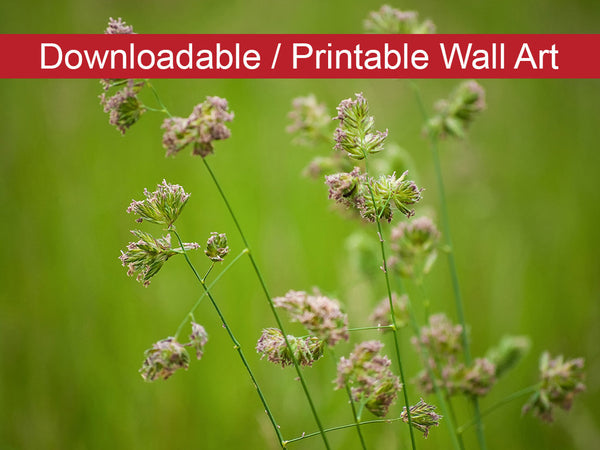 Digital Wall Art, Downloadable Prints, Botanical Nature Photograph Softened Fields - Wall Decor Instant Download Print - Printable