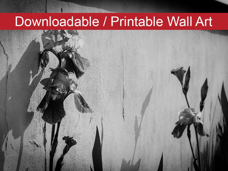 Iris on Wall in Black and White Floral Nature Photo DIY Wall Decor Instant Download Print - Printable
