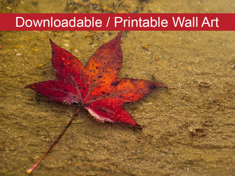 Leaf in the Rain Botanical Nature Photo DIY Wall Decor Instant Download Print - Printable