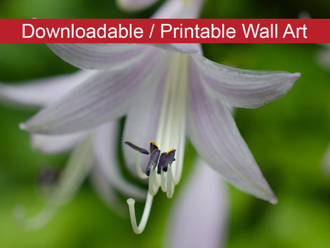 Hosta Bloom Floral Nature Photo DIY Wall Decor Instant Download Print - Printable