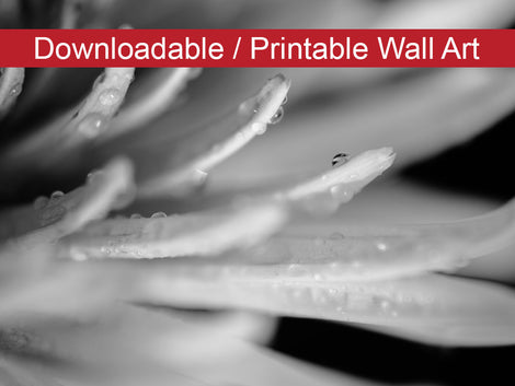 Droplets on Petals in Black and White Floral Nature Photo DIY Wall Decor Instant Download Print - Printable