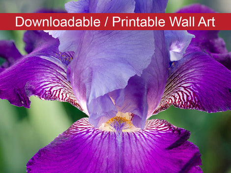Glowing Iris Floral Nature Photo DIY Wall Decor Instant Download Print - Printable